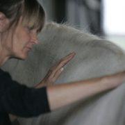 acupressuur-paard